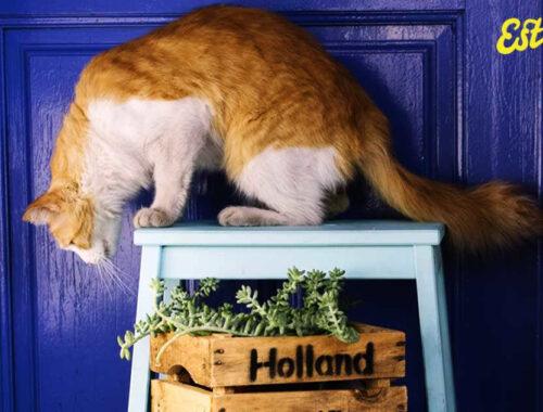 Husdjurssäkra krukväxter