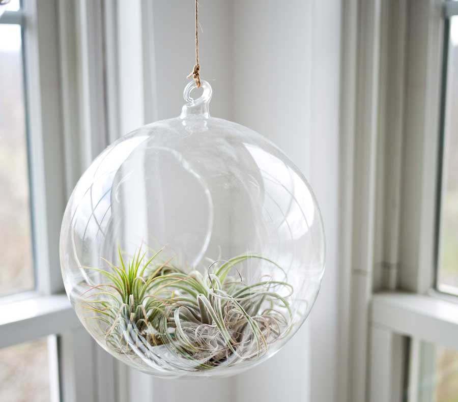 glasampel med växt i fönster